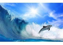 阳光下的海豚
