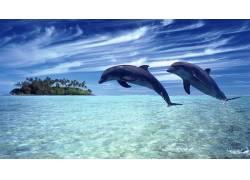 水面上跳跃的海豚