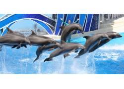 游泳池里的海豚