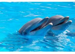 水里的海豚