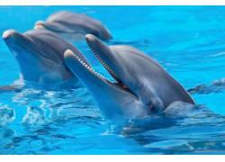 露出水面的海豚
