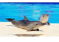 岸边的海豚