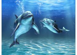 水里的两个海豚