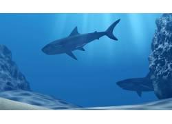水下的两条鱼