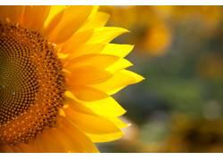 黄色鲜花背景