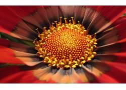 鲜花花蕊摄影