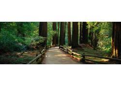 树林小道摄影