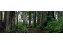 高清树林美景