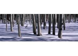 树林雪景摄影