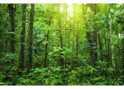 绿色树林高清摄影