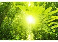 阳光下的芭蕉树美景高清摄影