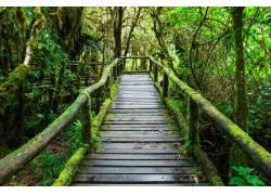 长苔藓的木板高清摄影