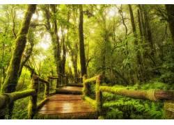 树林小道高清摄影