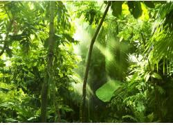 唯美树林高清摄影