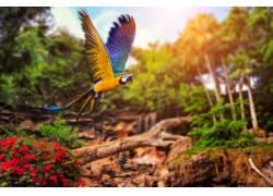 彩色鹦鹉美景高清摄影