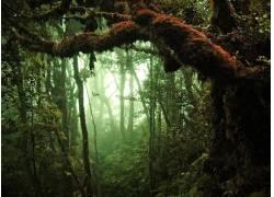 原始树林高清摄影