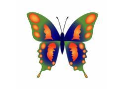 蝴蝶翅膀图案背景