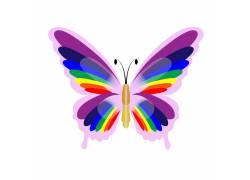 蝴蝶翅膀美丽花纹