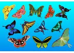 一组蝴蝶美丽花纹