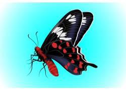 蝴蝶的红黑花纹翅膀