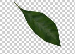 一片绿色的树叶
