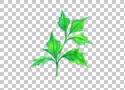 水彩绿色树叶设计