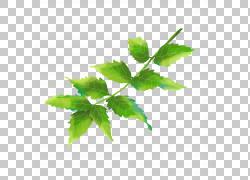 绿色的美丽树叶