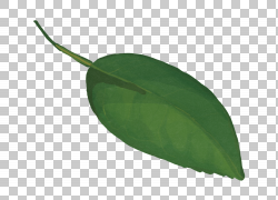 水墨绿色树叶