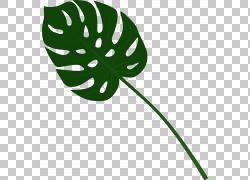 绿色龟背竹树叶