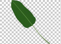 大扇子树叶
