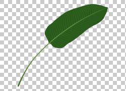 长长的树叶