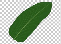 大型绿色树叶