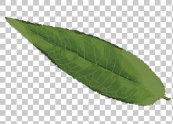 墨绿色树叶