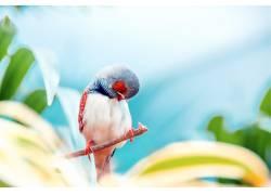 树枝上休息的小鸟
