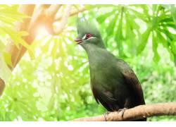 树枝上的美丽小鸟