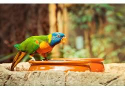 陶器上的鹦鹉摄影