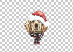 圣诞帽狗狗图片