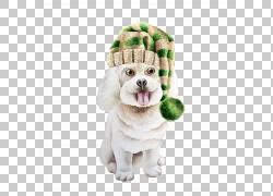 戴圣诞帽的狗图片