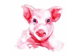 红色的小猪可爱卡通