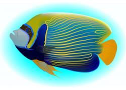 美丽海底热带鱼