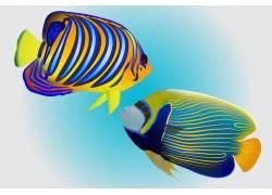海洋多彩热带鱼