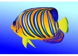 漂亮多彩热带鱼