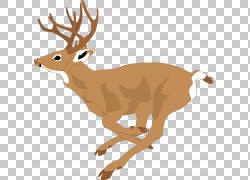跑步的圣诞鹿