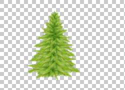 圣诞树云杉冷杉,树PNG clipart树枝,棕榈树,圣诞节装饰,草,新的一图片