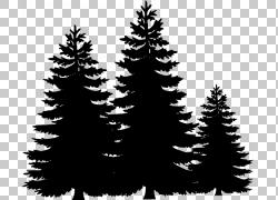 松树冷杉,黑树的PNG剪贴画圣诞节装饰,网站,云杉,针叶树,黑色和白图片