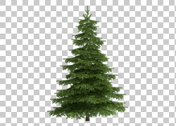 树苏格兰松树冷杉,修剪树PNG剪贴画圣诞节装饰,云杉,生物群落,针图片