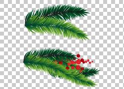 冷杉圣诞树PNG图片