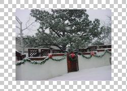 冷杉圣诞节装饰品图片