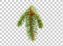 冷杉松树云杉圣诞树图片