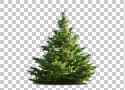 Nordmann冷杉圣诞树Middletown,树PNG clipart回收,废物,圣诞节装图片